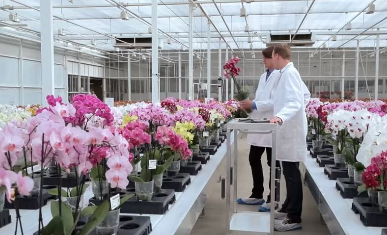 Anthurium and Orchid varieties are presented in the greenhouse