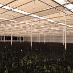Harmoniedoek in phalaenopsisteelt