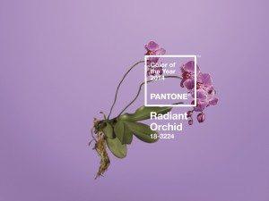 Pantone phalaenopsis colour