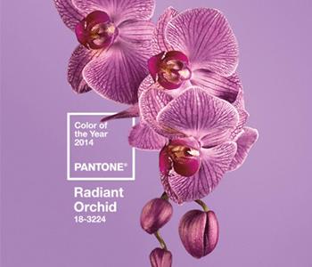 彩通(Pantone)专色奠定世界色彩基调