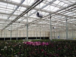 IMAC phalaenopsis ventilator