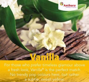 Anthurium Vanilla ©Anthura