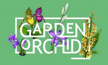 Nowy styl orchidei ogrodowych