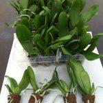Volgroeide planten in plug