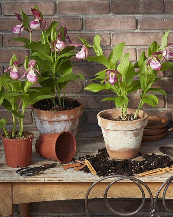 sfeerbeeld Garden Orchid 720x574