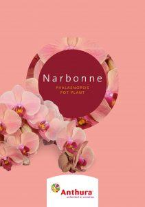 Noviteiten Leaflet Narbonne