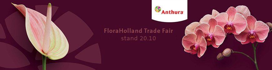 Bezoek Anthura op De FloraHolland Trade Fair