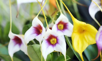 Discover the world of Orchids