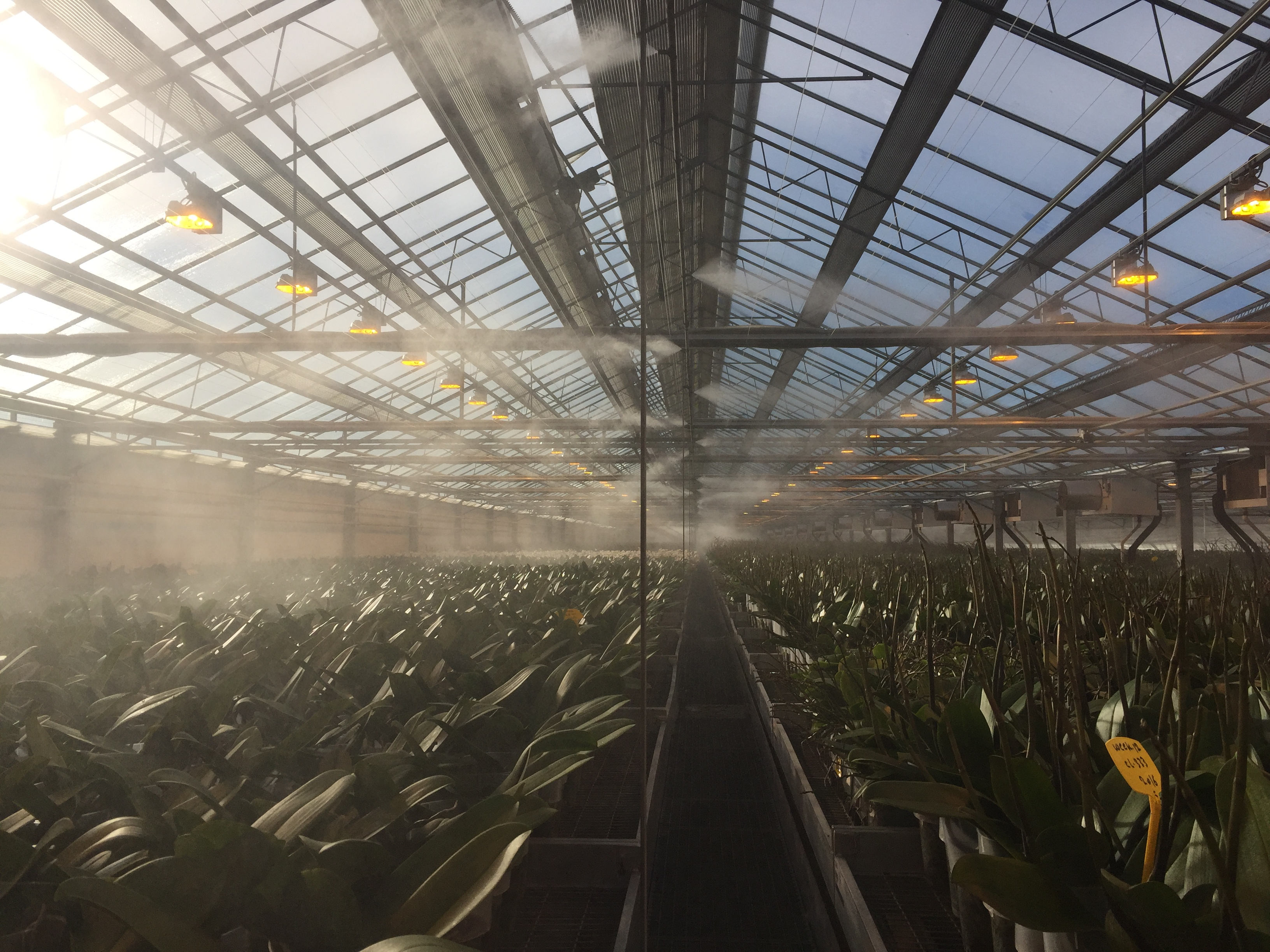 Humidity in cultivation