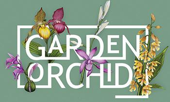 Hét seizoen van Garden Orchid