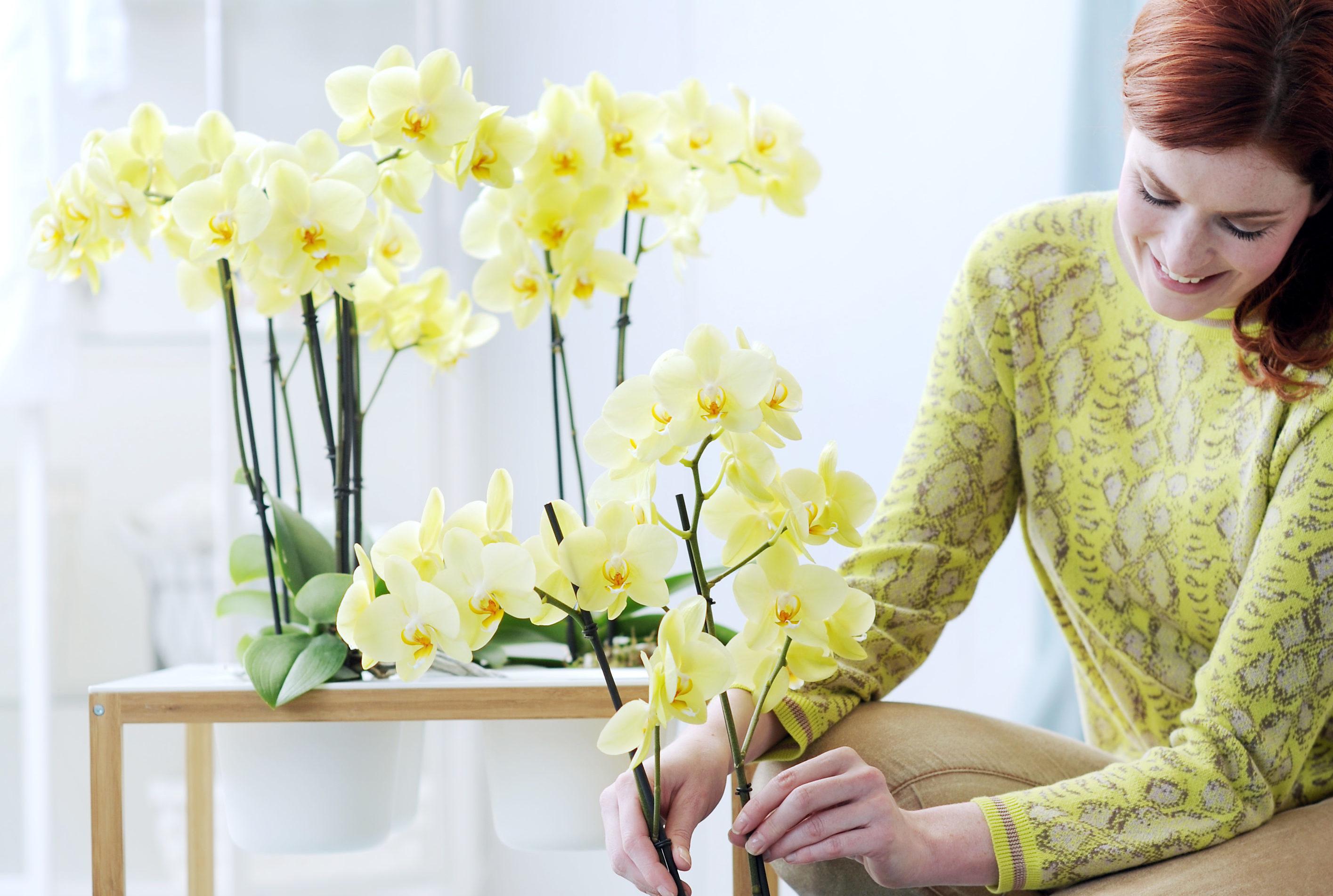 Een orchidee verzorgen: een aantal tips voor een optimaal bloeiende plant