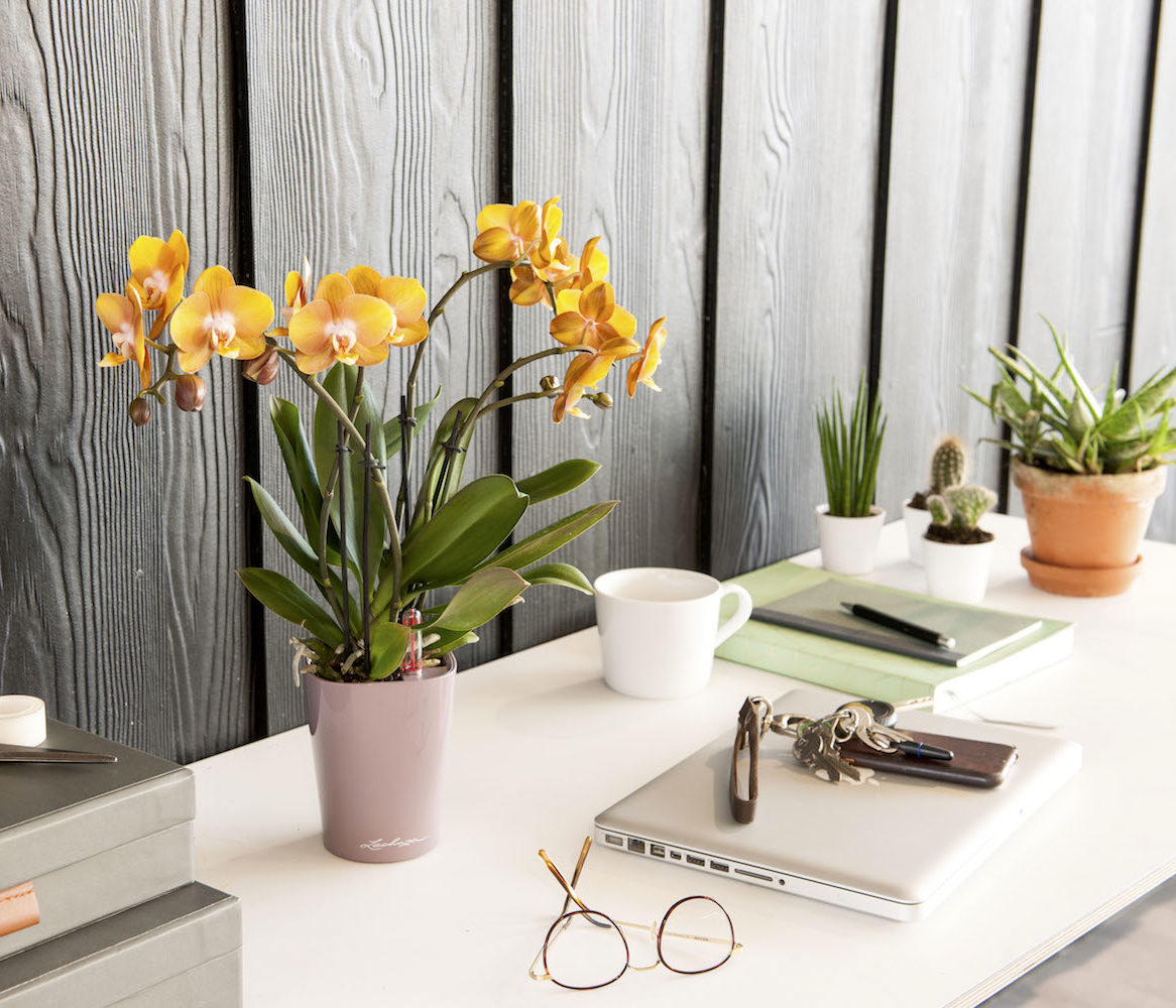 Create a home office you'll love to work in