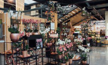 Assortimentspresentatie bij Ter Laak Orchids