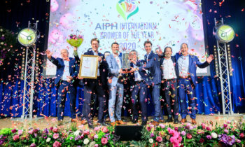 Anthura is Gold Rose winner at the International Grower of the Year Award 2020