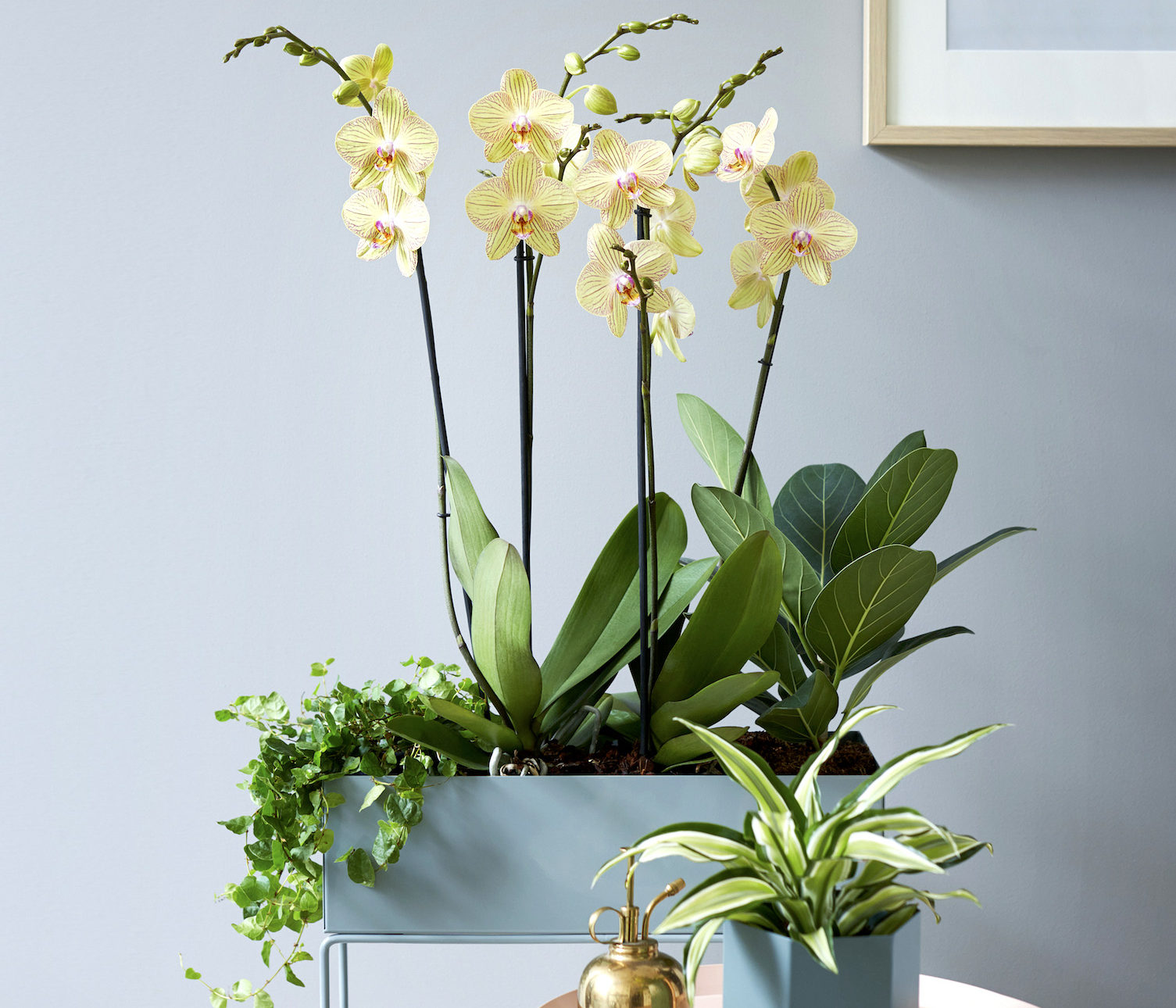 4 original ways to style an orchid at home