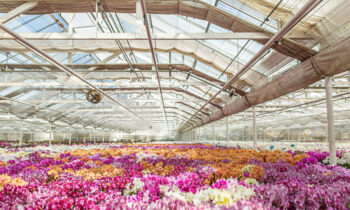Interview with Toine Overgaag of Westerlay Orchids