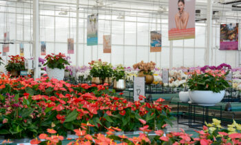 Our new show greenhouse inspires the entire chain